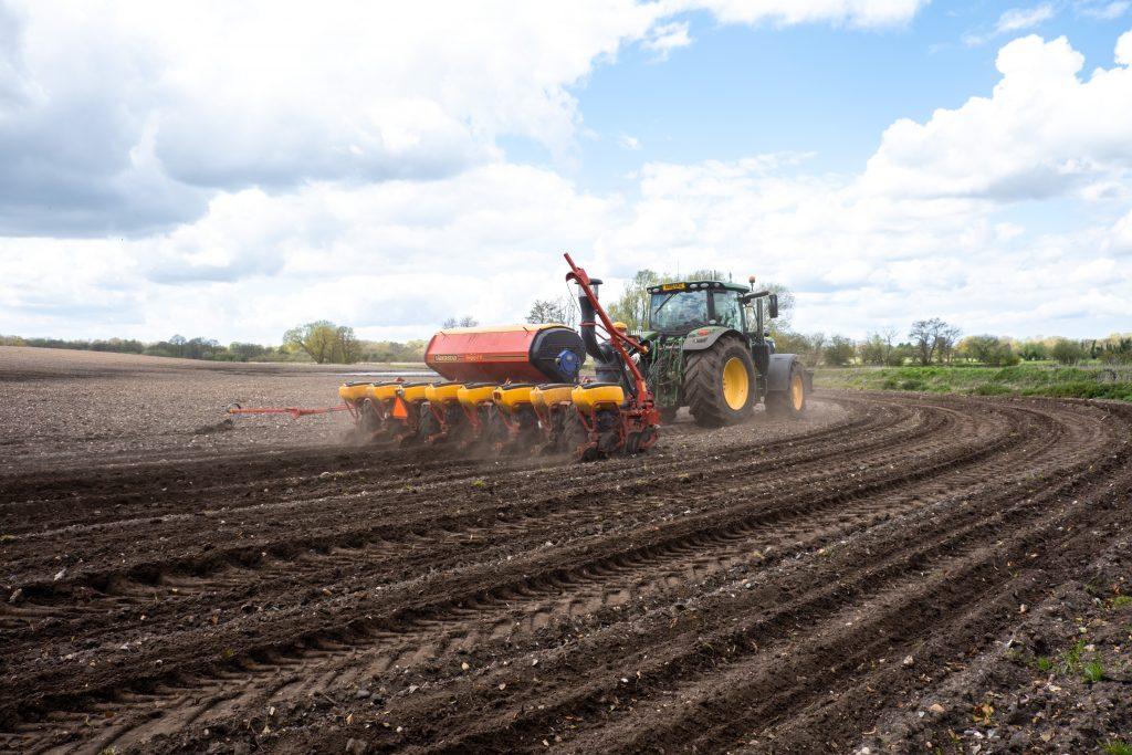 Tractor planting sweetcorn