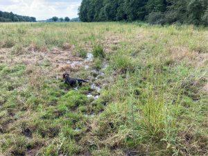 Photo of dog on Pingo ponds